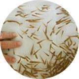 feeder-fish