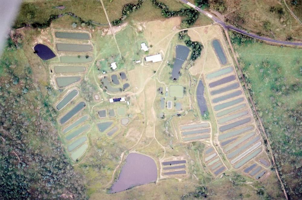 FACT_farm_1999